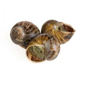 snailss